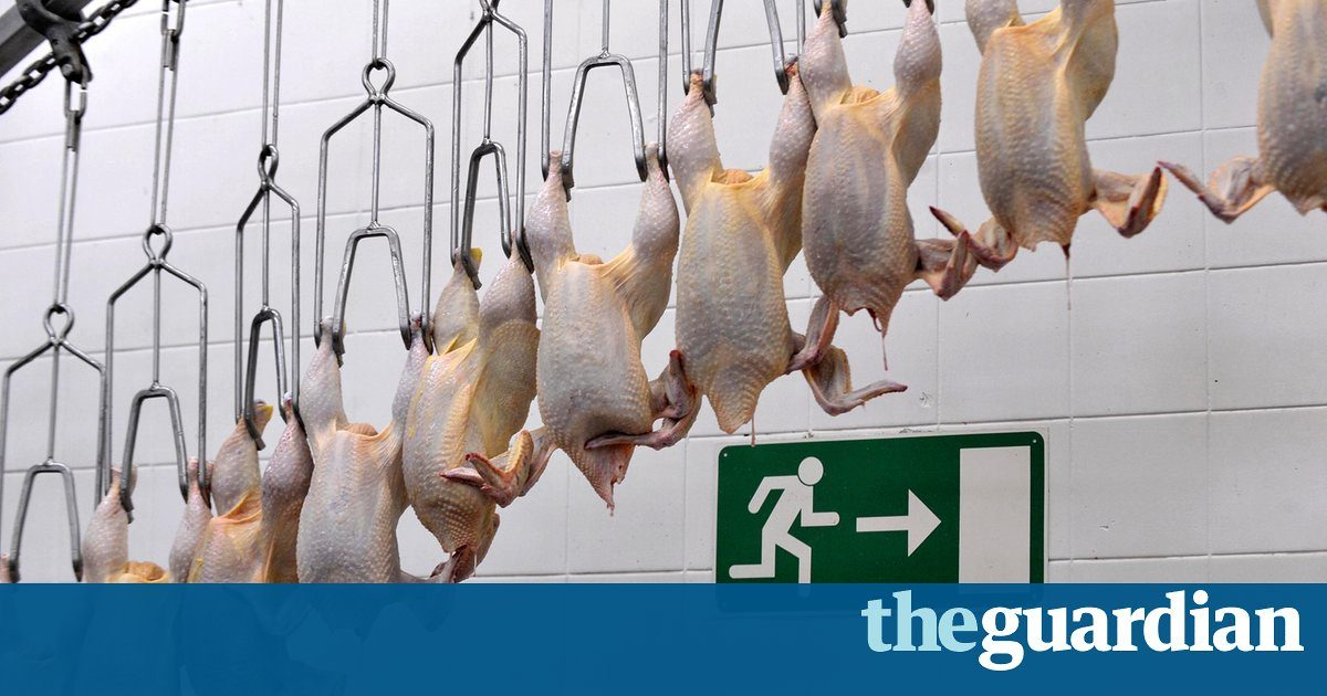 Workers describe rampant abuse at Alabama chicken processing plant