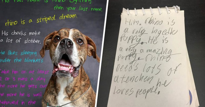 Little Boy's Family Decided To Surrender His Dog, So He Left A Heartbreaking Note
